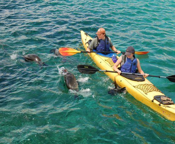 Galapagos Wildtier Entdeckungstour